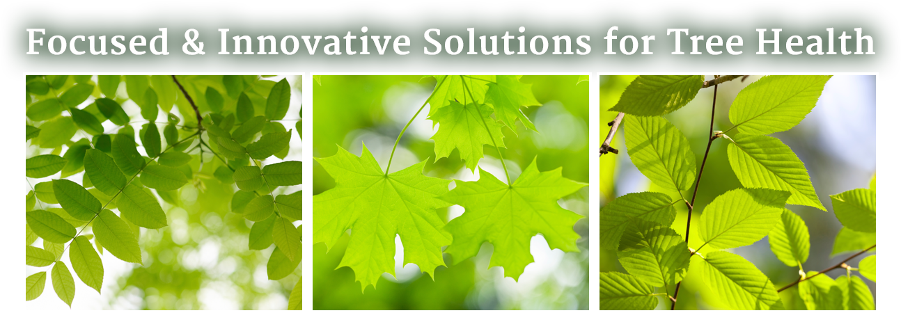 Focused and Innovative Solutions for Tree Health